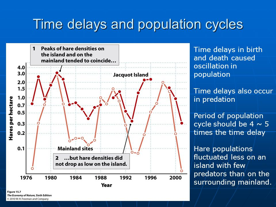 Time delays and population cycles Time delays in birth and death caused oscillation in population Time delays also occur in predation Period of population cycle should be 4 ~ 5 times the time delay Hare populations fluctuated less on an island with few predators than on the surrounding mainland.