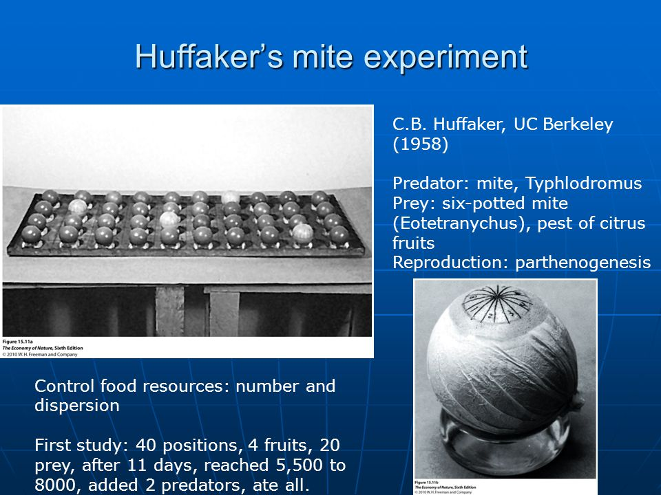 Huffaker's mite experiment C.B. Huffaker, UC Berkeley (1958) Predator: mite, Typhlodromus Prey: six-potted mite (Eotetranychus), pest of citrus fruits
