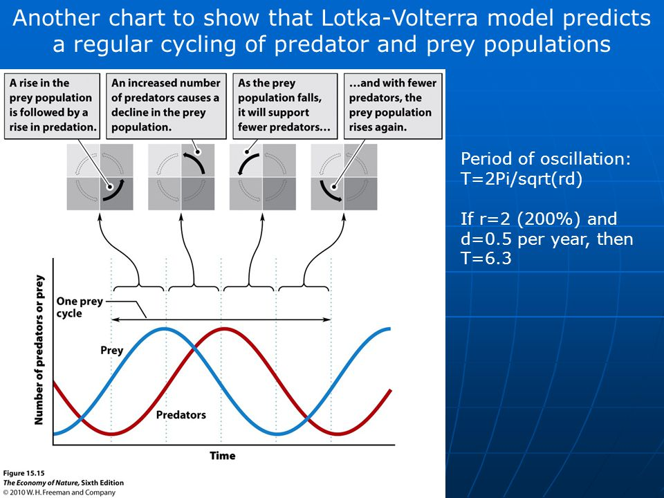 Another chart to show that Lotka-Volterra model predicts a regular cycling of predator and prey populations Period of oscillation: T=2Pi/sqrt(rd) If r=2 (200%) and d=0.5 per year, then T=6.3