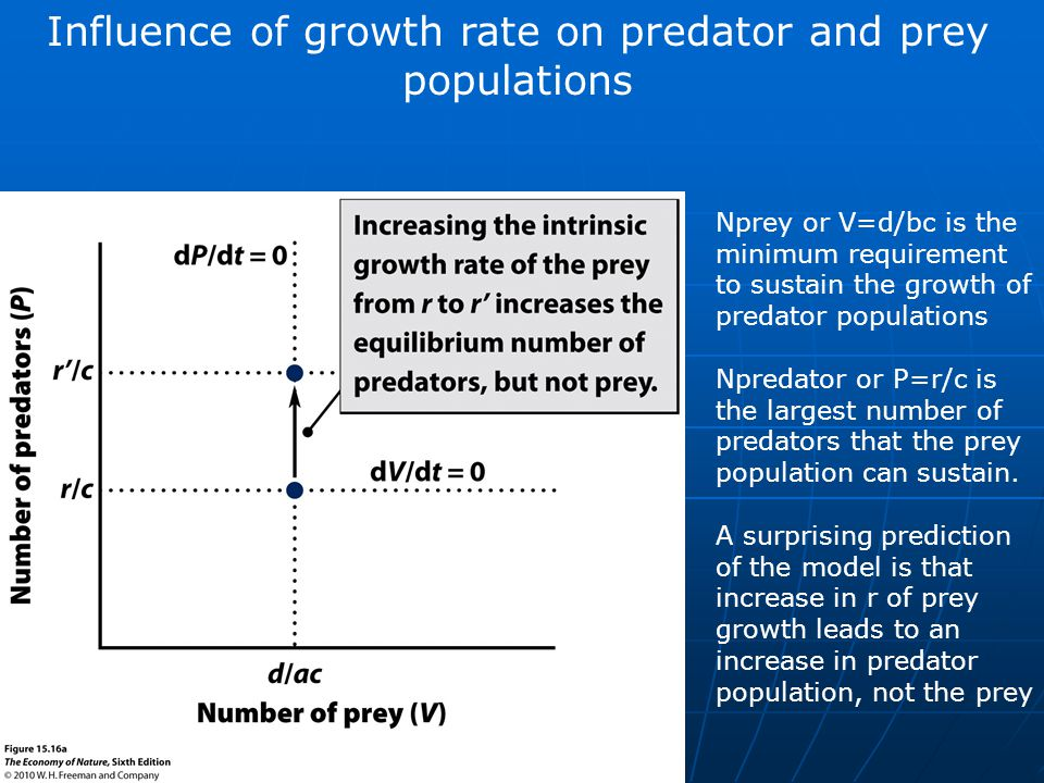Influence of growth rate on predator and prey populations Nprey or V=d/bc is the minimum requirement to sustain the growth of predator populations Npredator or P=r/c is the largest number of predators that the prey population can sustain.