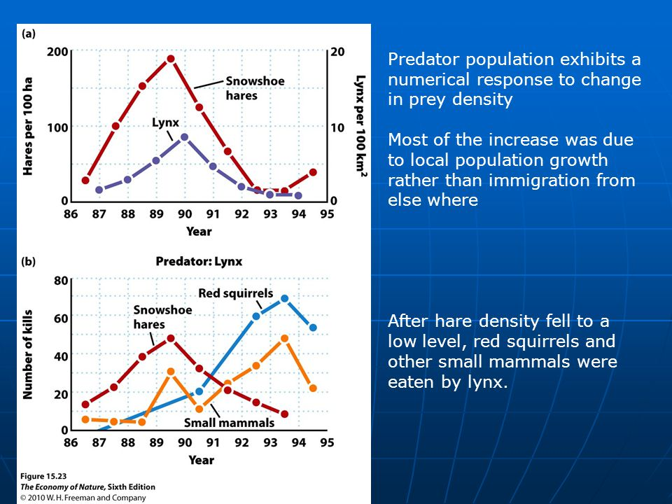Predator population exhibits a numerical response to change in prey density Most of the increase was due to local population growth rather than immigration from else where After hare density fell to a low level, red squirrels and other small mammals were eaten by lynx.