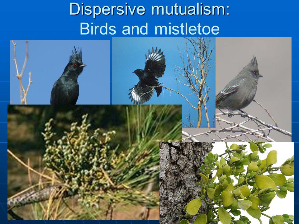 Dispersive mutualism: Dispersive mutualism: Birds and mistletoe