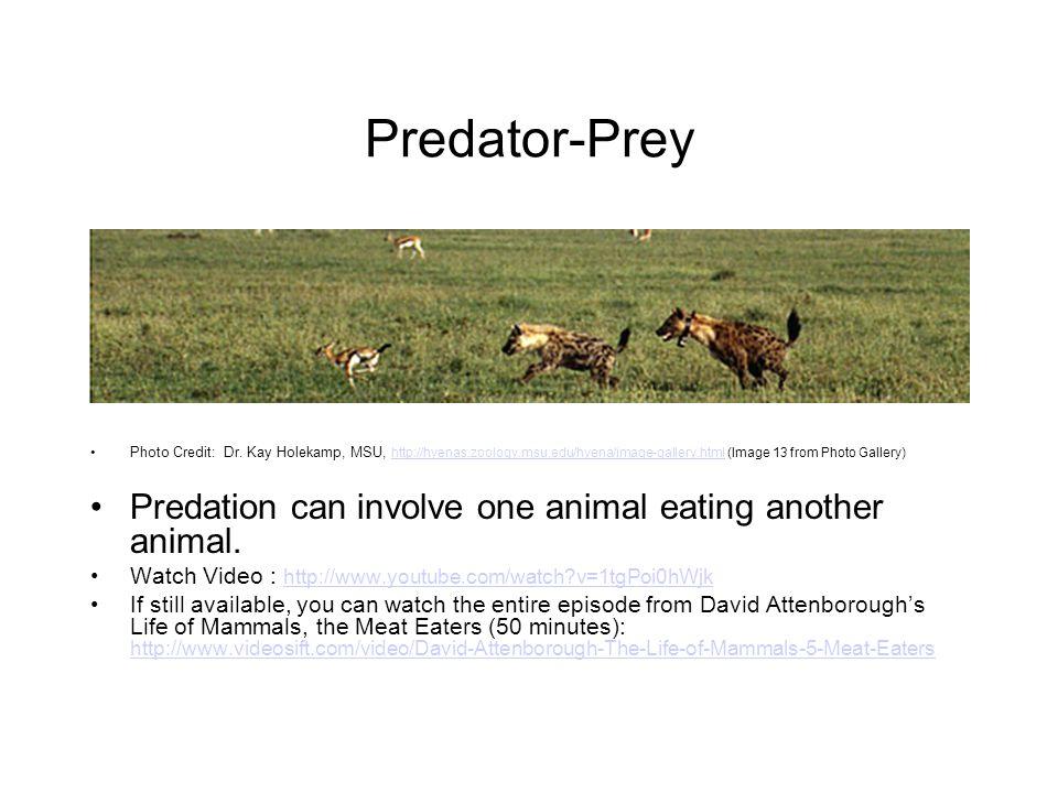 Predator-Prey Photo Credit: Dr.