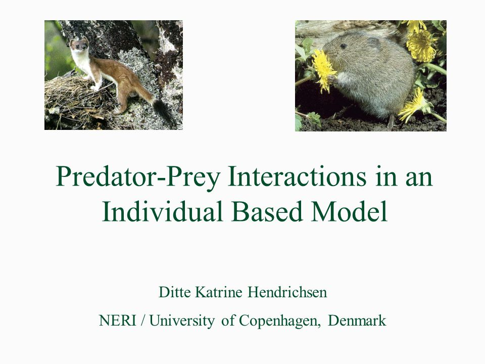 Predator-Prey Interactions in an Individual Based Model Ditte Katrine Hendrichsen NERI / University of Copenhagen, Denmark