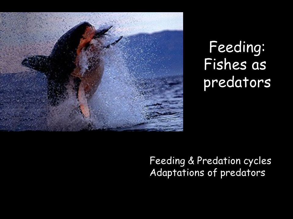 Predator – Prey arms race Co-evolution of predatory and escape mechanisms –Morphological adaptations –Behavioral adaptations –Ecological adaptations there is no perfect predatory nor perfect escape tactic