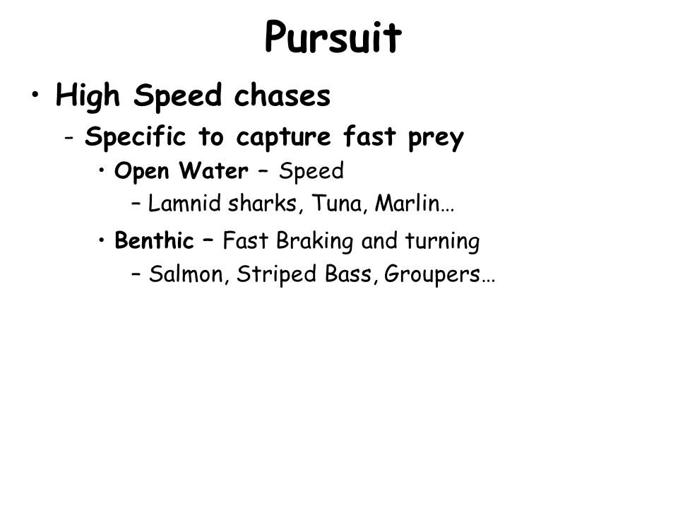 Pursuit High Speed chases -Specific to capture fast prey Open Water – Speed –Lamnid sharks, Tuna, Marlin… Benthic – Fast Braking and turning –Salmon,