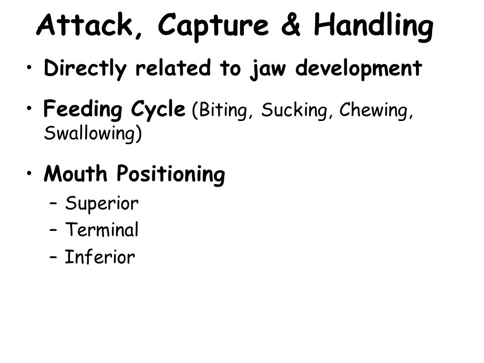 Attack, Capture & Handling Directly related to jaw development Feeding Cycle (Biting, Sucking, Chewing, Swallowing) Mouth Positioning –Superior –Terminal –Inferior