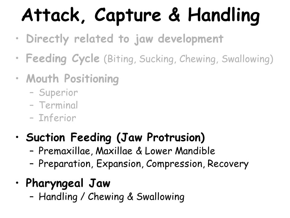 Attack, Capture & Handling Directly related to jaw development Feeding Cycle (Biting, Sucking, Chewing, Swallowing) Mouth Positioning –Superior –Termi