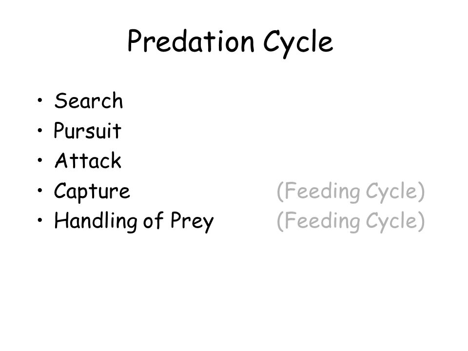 Predation Cycle Search Pursuit Attack Capture (Feeding Cycle) Handling of Prey (Feeding Cycle)