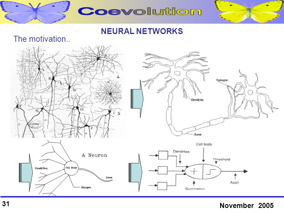 31 November 2005 NEURAL NETWORKS The motivation..