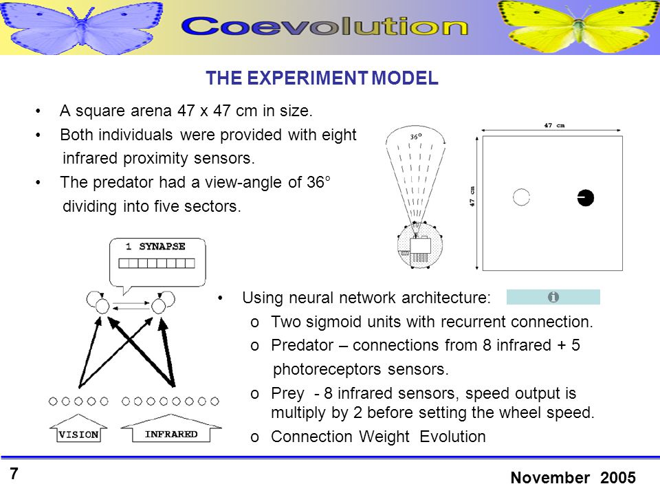28 November 2005 CONCLUSIONS Simple evolution can create very effective prey or predator against the best of co-evolved predators or preys, respectively.