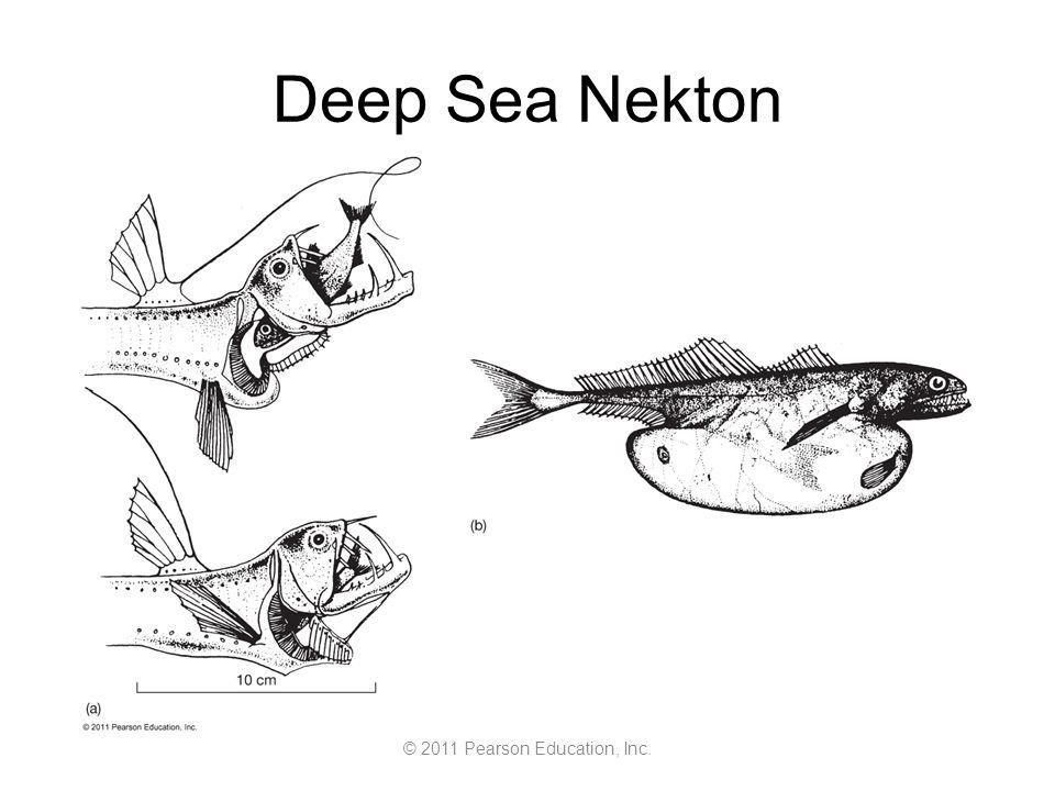 © 2011 Pearson Education, Inc. Deep Sea Nekton