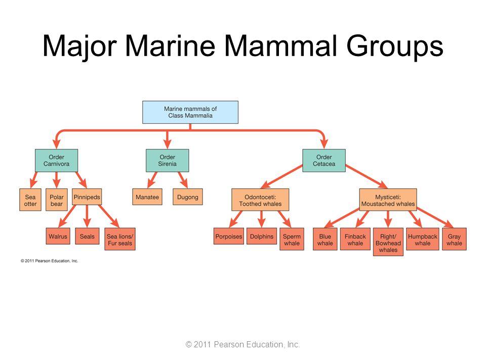 © 2011 Pearson Education, Inc. Major Marine Mammal Groups