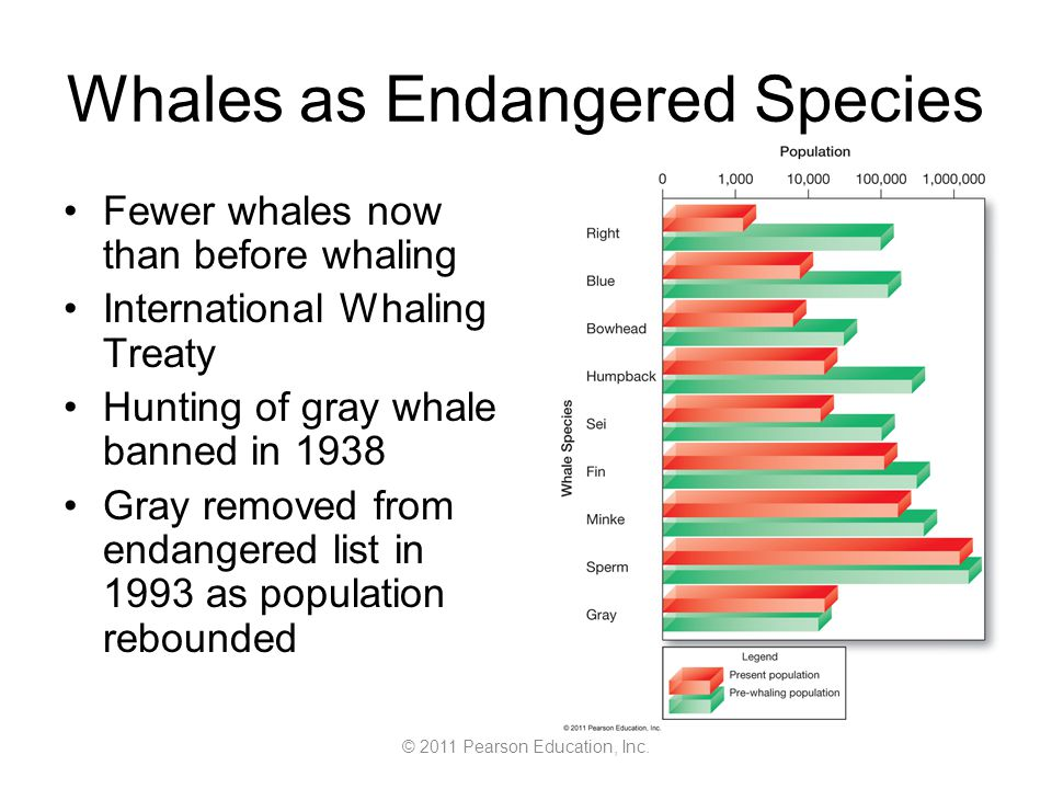 © 2011 Pearson Education, Inc. Whales as Endangered Species Fewer whales now than before whaling International Whaling Treaty Hunting of gray whale ba