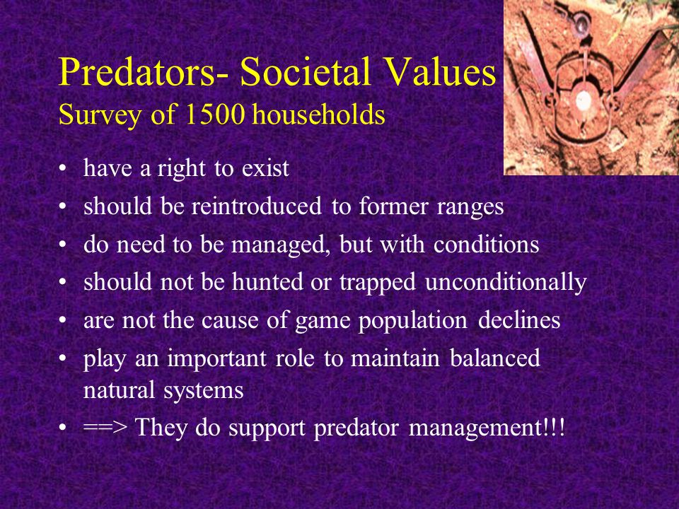 Predators- Societal Values Survey of 1500 households have a right to exist should be reintroduced to former ranges do need to be managed, but with conditions should not be hunted or trapped unconditionally are not the cause of game population declines play an important role to maintain balanced natural systems ==> They do support predator management!!!