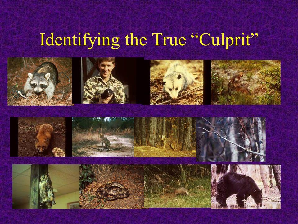 "Identifying the True ""Culprit"""