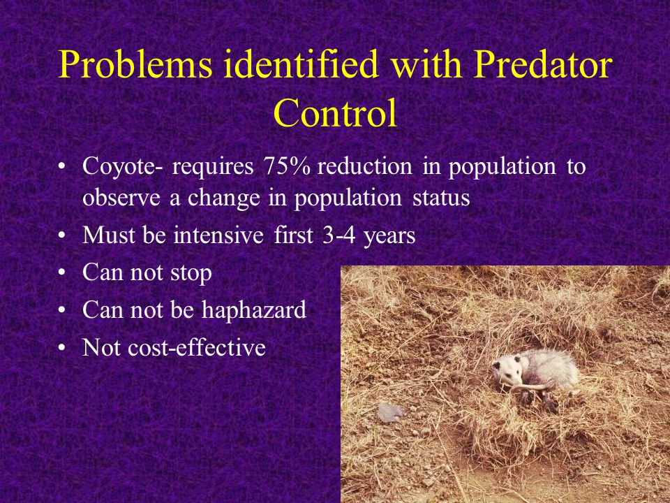Problems identified with Predator Control Coyote- requires 75% reduction in population to observe a change in population status Must be intensive firs