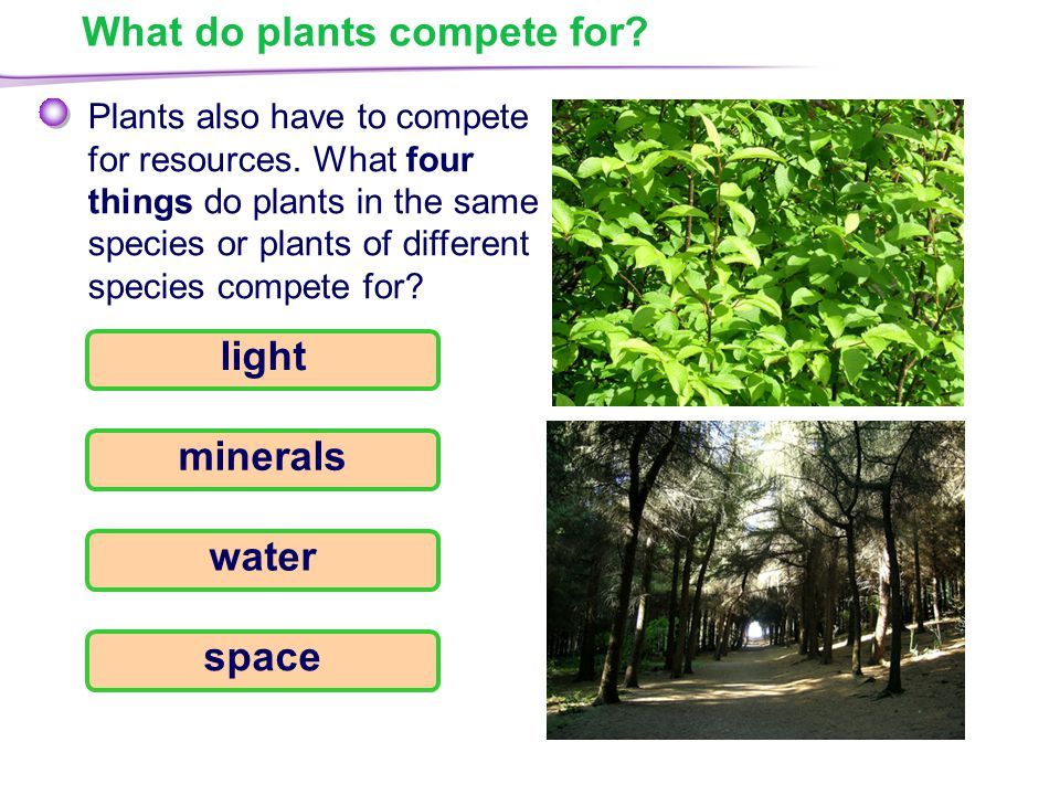 What do plants compete for. Plants also have to compete for resources.