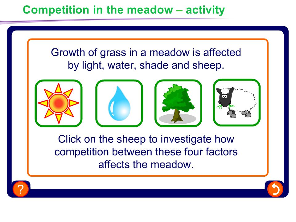 Competition in the meadow – activity