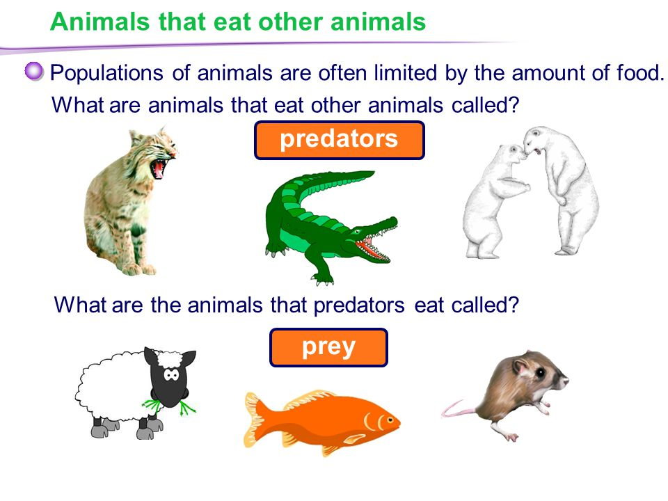 Animals that eat other animals What are animals that eat other animals called.