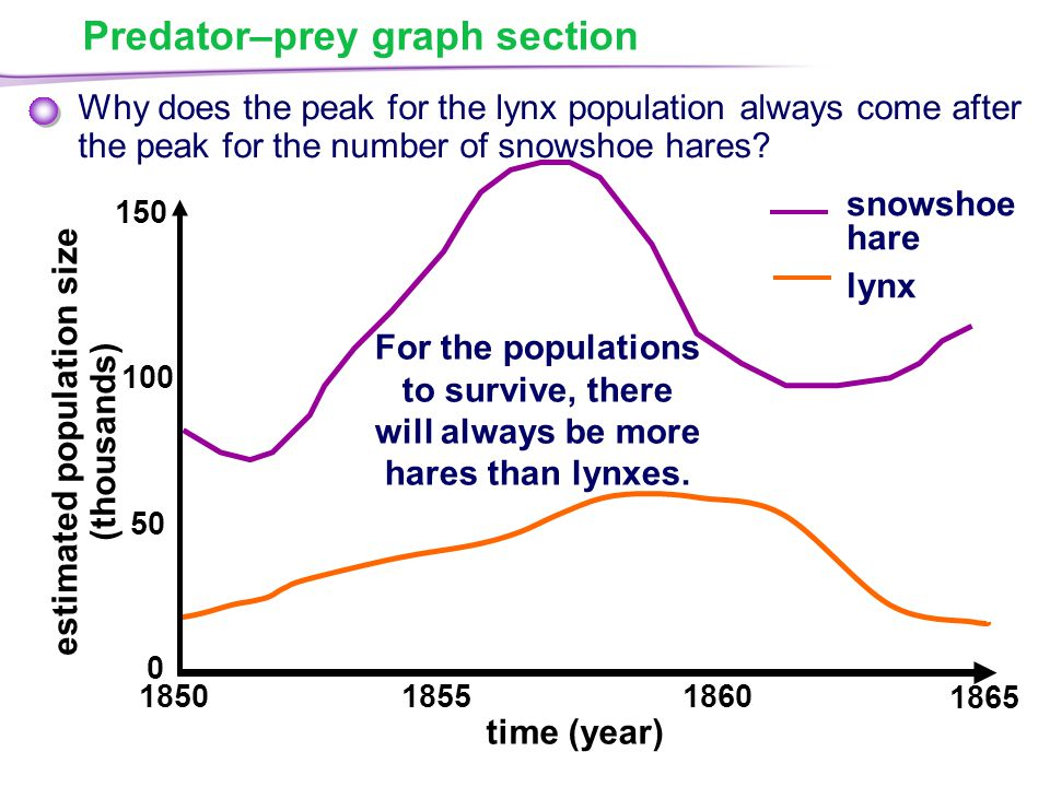 Predator–prey graph section Why does the peak for the lynx population always come after the peak for the number of snowshoe hares.