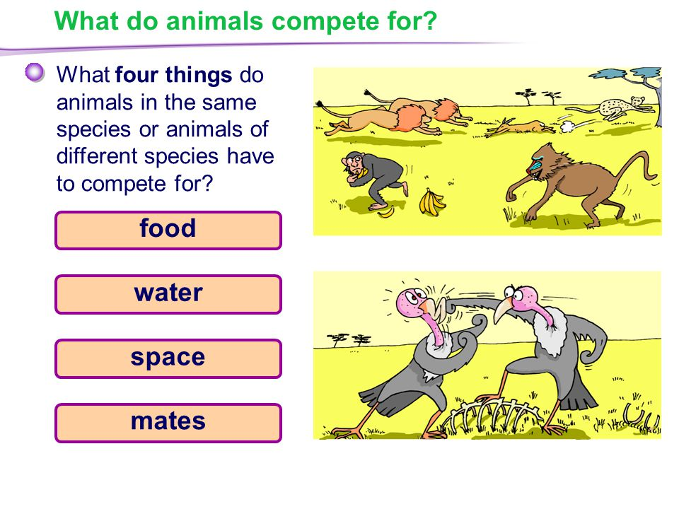 What do animals compete for.