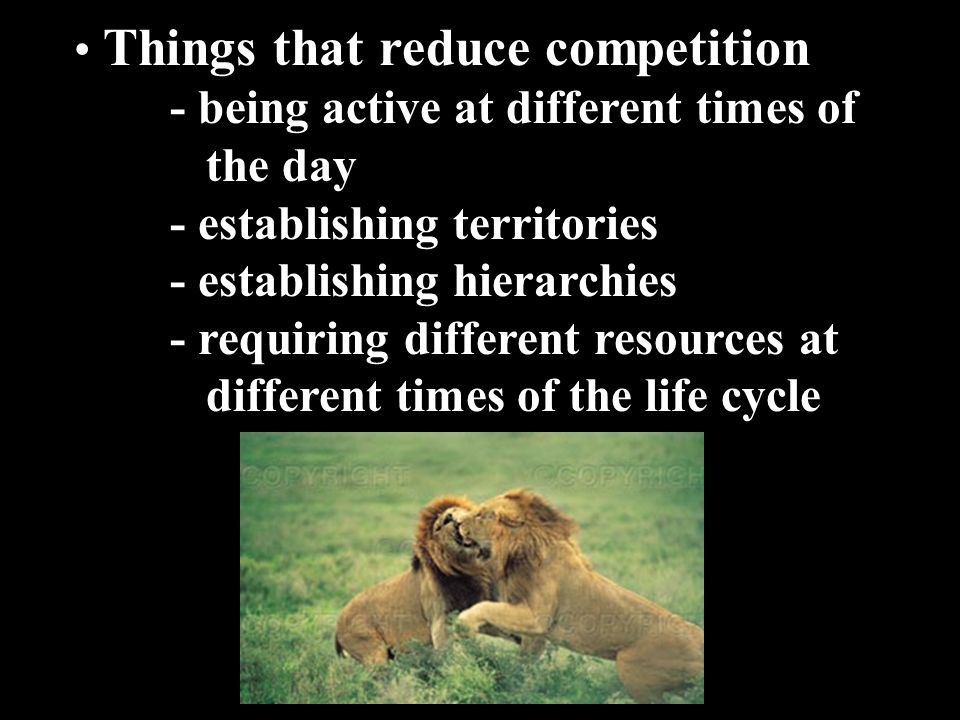 Things that reduce competition - being active at different times of the day - establishing territories - establishing hierarchies - requiring differen