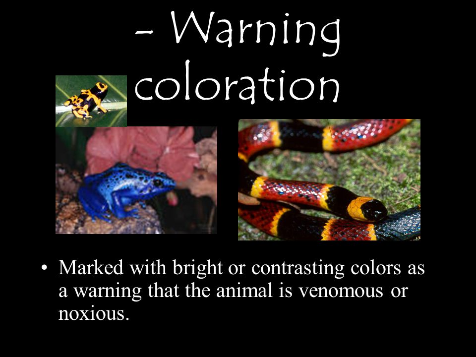 Marked with bright or contrasting colors as a warning that the animal is venomous or noxious.
