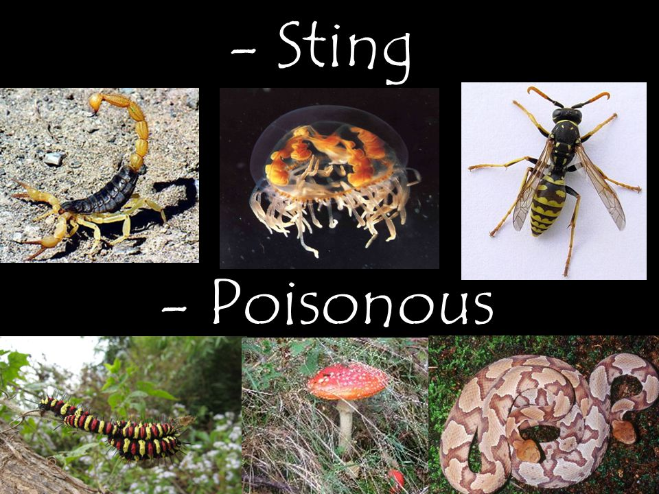 - Sting - Poisonous