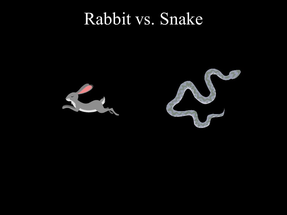Rabbit vs. Snake