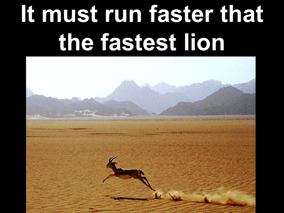 It must run faster that the fastest lion