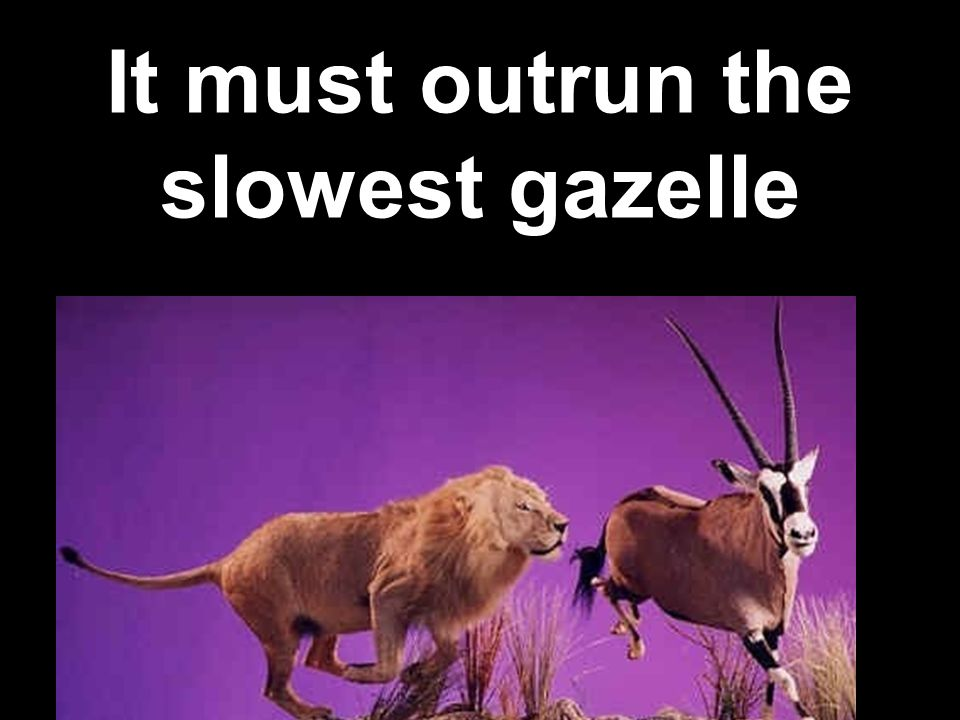 It must outrun the slowest gazelle