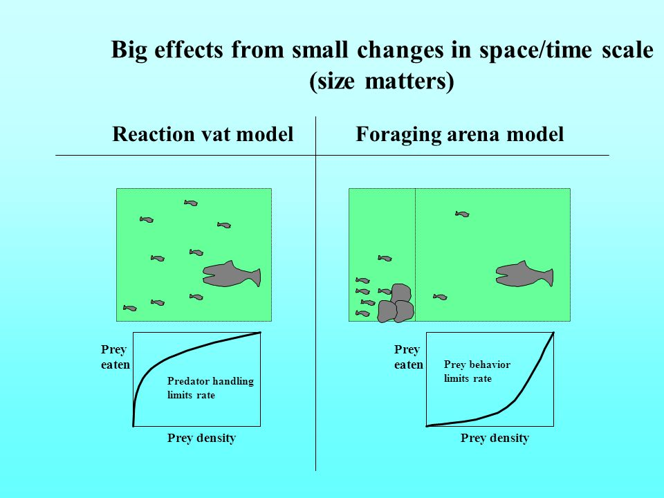 Big effects from small changes in space/time scale (size matters) Reaction vat modelForaging arena model Prey eaten Prey density Prey eaten Prey density Predator handling limits rate Prey behavior limits rate