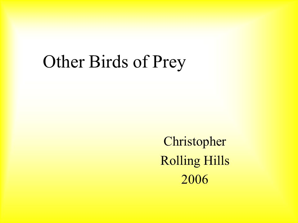 Other Birds of Prey Christopher Rolling Hills 2006