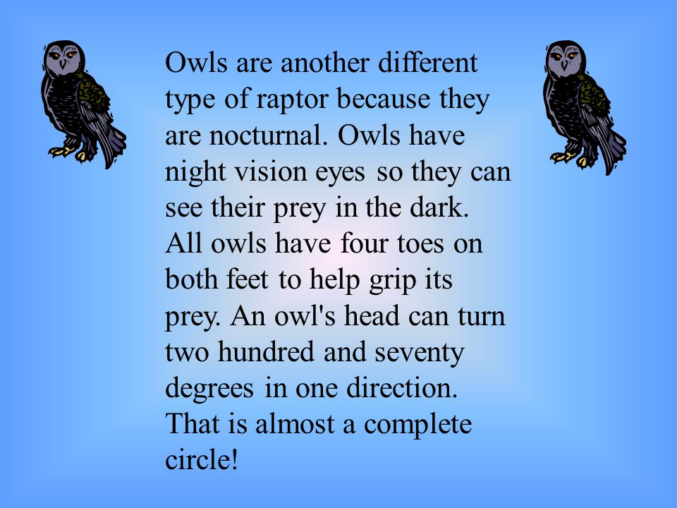 Owls are another different type of raptor because they are nocturnal.