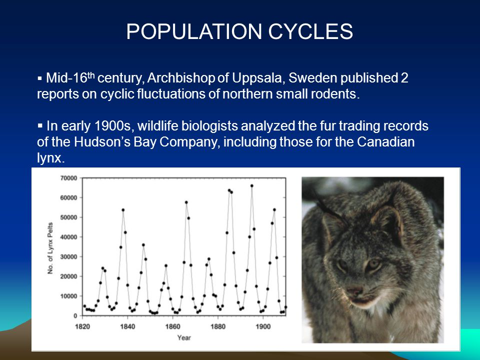  Mid-16 th century, Archbishop of Uppsala, Sweden published 2 reports on cyclic fluctuations of northern small rodents.