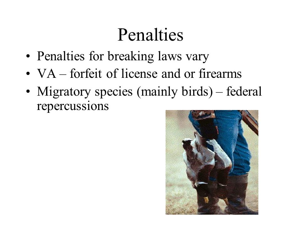 Penalties Penalties for breaking laws vary VA – forfeit of license and or firearms Migratory species (mainly birds) – federal repercussions