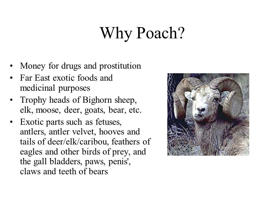 Why Poach.