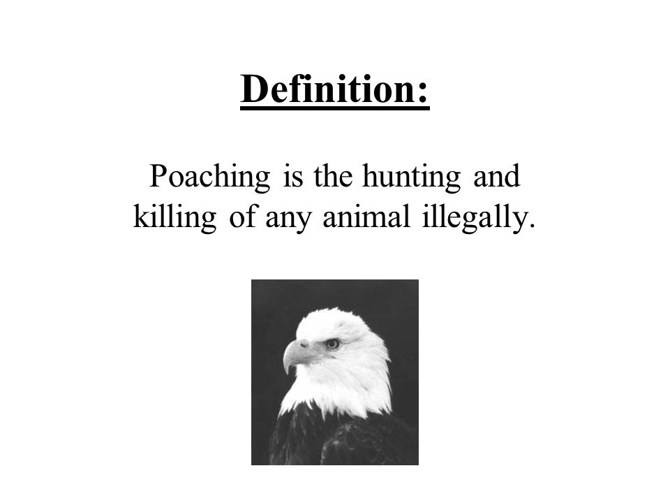 Definition: Poaching is the hunting and killing of any animal illegally.