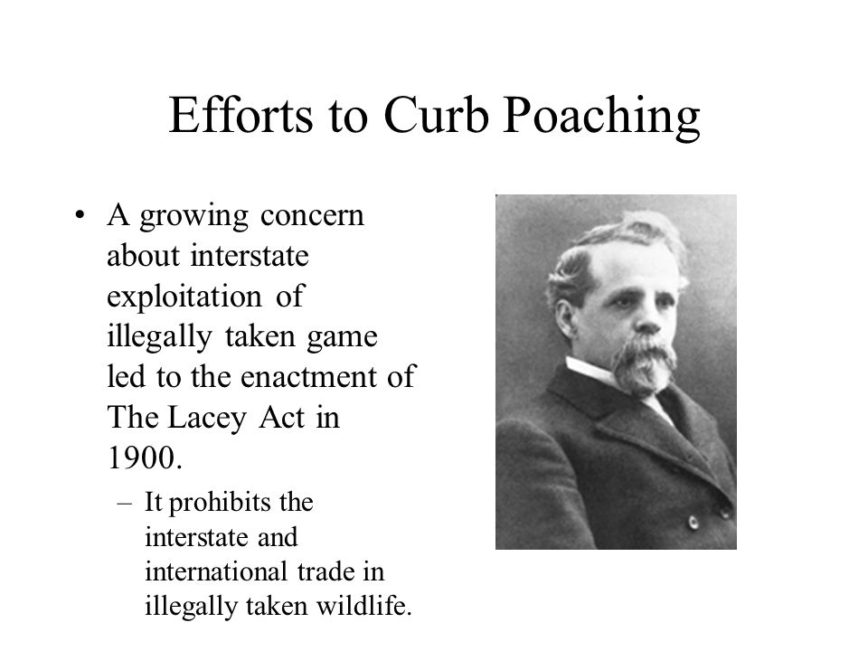 Efforts to Curb Poaching A growing concern about interstate exploitation of illegally taken game led to the enactment of The Lacey Act in 1900. –It pr