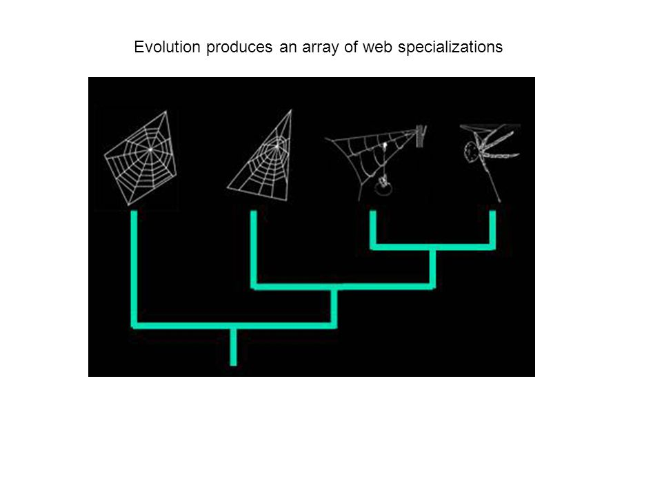 Evolution produces an array of web specializations