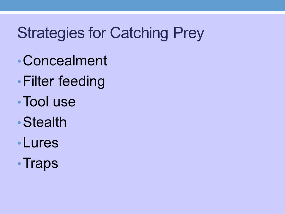 Strategies for Catching Prey Concealment Filter feeding Tool use Stealth Lures Traps