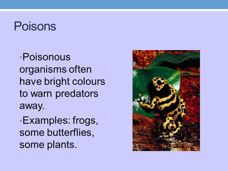Poisons Poisonous organisms often have bright colours to warn predators away.