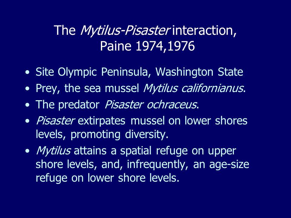 The Mytilus-Pisaster interaction, Paine 1974,1976 Site Olympic Peninsula, Washington State Prey, the sea mussel Mytilus californianus.
