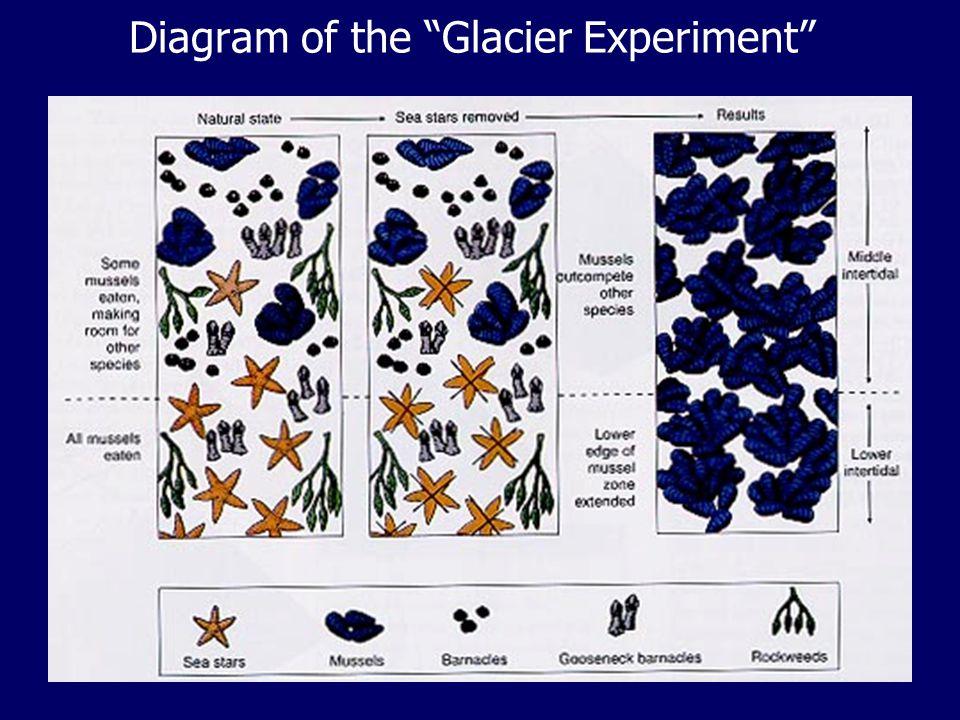 Diagram of the Glacier Experiment