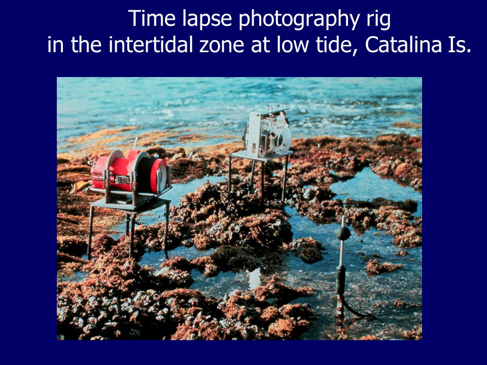 Time lapse photography rig in the intertidal zone at low tide, Catalina Is.