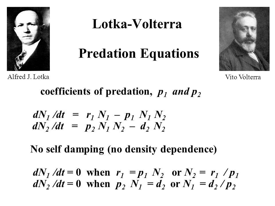 Lotka-Volterra Predation Equations coefficients of predation, p 1 and p 2 dN 1 /dt = r 1 N 1 – p 1 N 1 N 2 dN 2 /dt = p 2 N 1 N 2 – d 2 N 2 No self damping (no density dependence) dN 1 /dt = 0 when r 1 = p 1 N 2 or N 2 = r 1 / p 1 dN 2 /dt = 0 when p 2 N 1 = d 2 or N 1 = d 2 / p 2 Alfred J.
