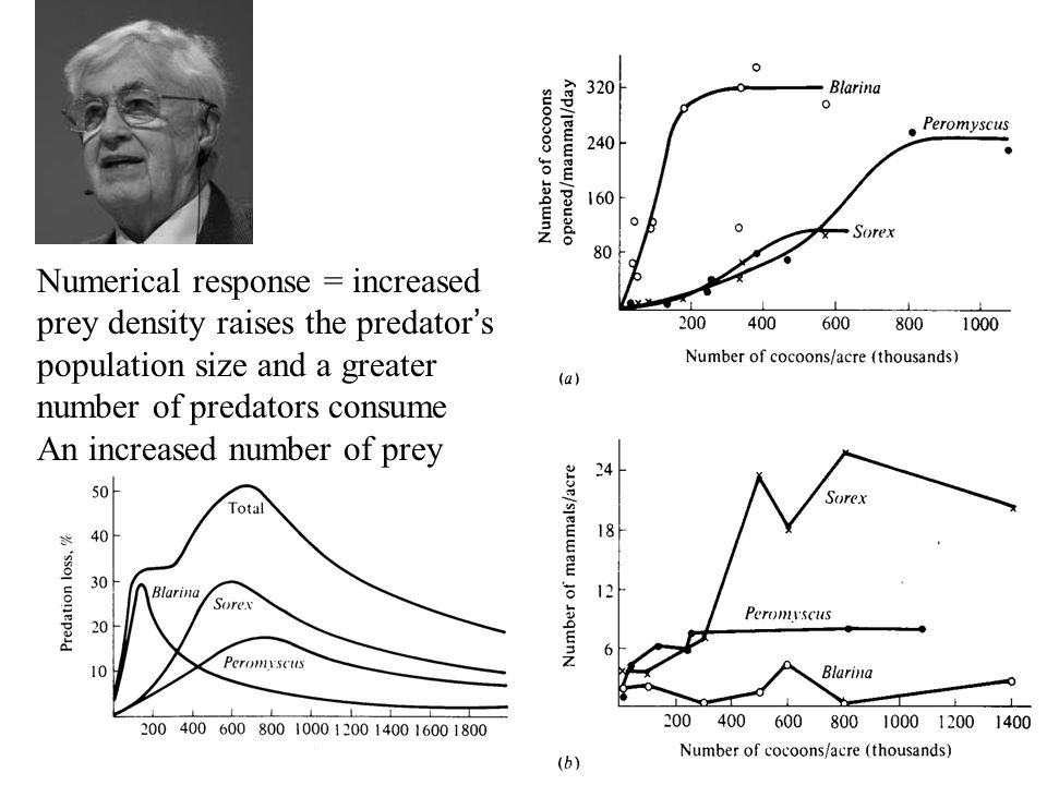Numerical response = increased prey density raises the predator ' s population size and a greater number of predators consume An increased number of p