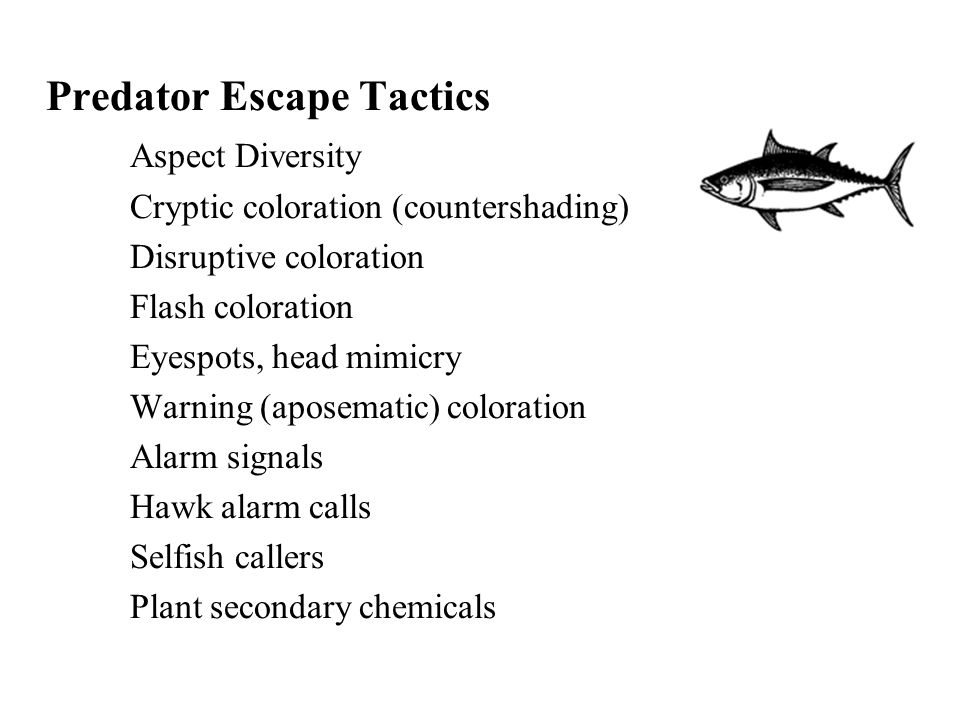 Predator Escape Tactics Aspect Diversity Cryptic coloration (countershading) Disruptive coloration Flash coloration Eyespots, head mimicry Warning (aposematic) coloration Alarm signals Hawk alarm calls Selfish callers Plant secondary chemicals