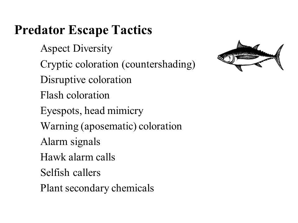 Predator Escape Tactics Aspect Diversity Cryptic coloration (countershading) Disruptive coloration Flash coloration Eyespots, head mimicry Warning (ap